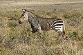 Karoo National Park 2014 34.jpg
