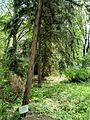 Kharkiv natural sanctuary Institute 5.JPG