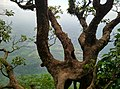 Kollengode South, Kerala, India - panoramio (45).jpg