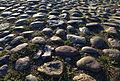 Kopfsteinpflaster in Meinholz.jpg