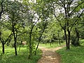 Kunming Botanical Garden - DSC03263.JPG