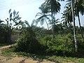 Kurunegala, Sri Lanka - panoramio (5).jpg