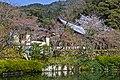 Kyoto, 桜, sakura, Eikandocho - panoramio.jpg