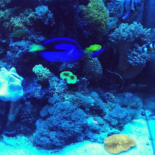 L'aquarium tropical de beau-papa