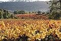 L'automne au Castellet - 06.jpg