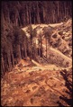 LUMBER ROADS AND CLEAR-CUTTING ENCROACH ON PINE FOREST - NARA - 542947.tif