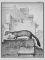 La Fouine - Beech Marten - Gallica - ark 12148-btv1b2300254t-f20.png