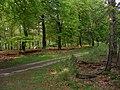 Laanbeplanting in Nationaal Park de Hooge Veluwe.JPG