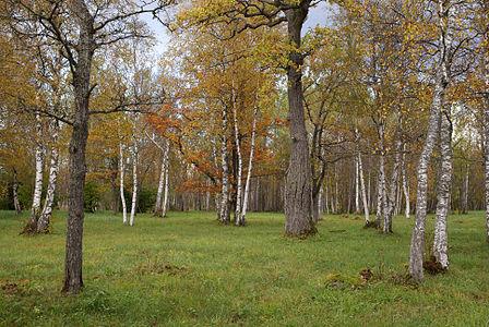 Laelatu wooded meadow