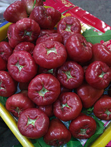 Lainwu (Wax apple) WP 001223.jpg