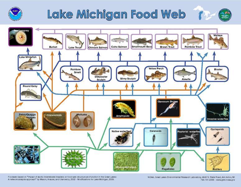 File:Lake Michigan Food Web.pdf