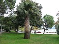 Lakeside trees in Locarno 3.jpg