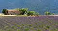 Landscape Provence France 1.jpg