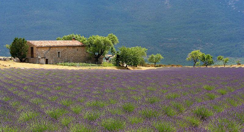 Fichier:Landscape Provence France 1.jpg