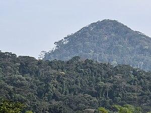 Ziama Massif - Landscape of Ziama Massif