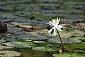 Law Garden, Ahmedabad - India (4052133455).jpg