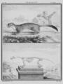 Le Roselet - Hermine, Summer Fur - Gallica - ark 12148-btv1b2300254t-f33.png