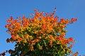 Leaves in autumn.jpg