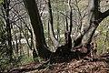 Leitenwälder der Isar 0590.jpg