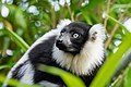 Lemur (24677041318).jpg