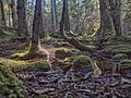 Lena Loop Tongass 573.jpg