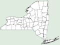 Leonurus marrubiastrum NY-dist-map.png