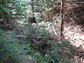 Les na Vysočině, okolí obce Věž.jpg