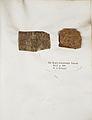 Lichenes Helvetici IX X 1833 020.jpg