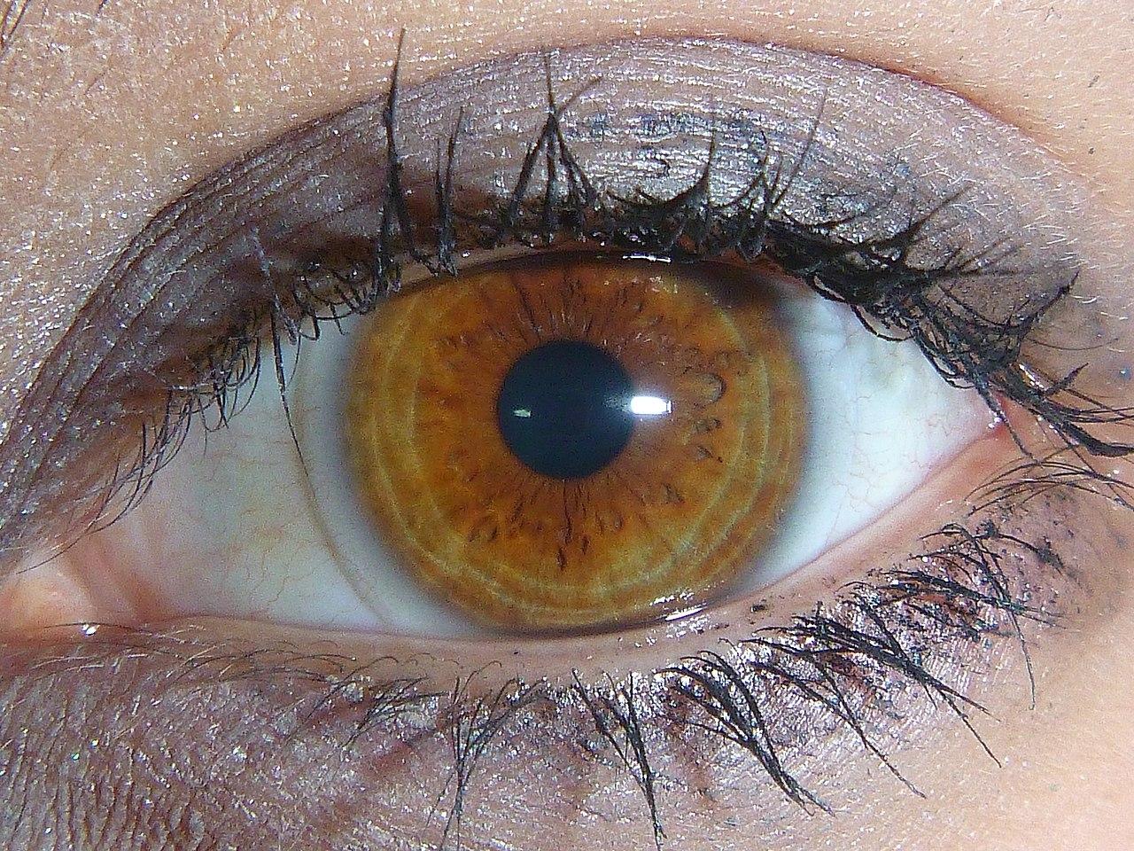 Image Result For Light Hazel Color