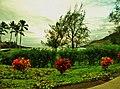 Lihue, Kauai, Hawaii - panoramio (27).jpg