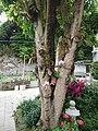 Ling Wan Monastery 13.jpg
