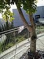 Lipke tree.jpg
