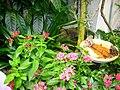 Living Conservatory NC.jpg