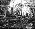 Loggers in the woods, Vance Lumber Company, near Malone, ca 1916 (KINSEY 1336).jpeg