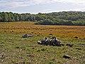 Looking across bogland at Pilmore Gate Heath - geograph.org.uk - 989332.jpg