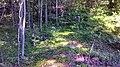 Ludington, MI 49431, USA - panoramio (3).jpg