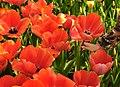 M^m Flores en el parque en la Haya - Creative Commons by gnuckx - panoramio (18).jpg