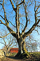 Mårtagården Mårtens trädgrotta januari 2012.jpg