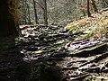 Mühsamer Weg auf Wurzelknoten und Felsbrocken - panoramio.jpg