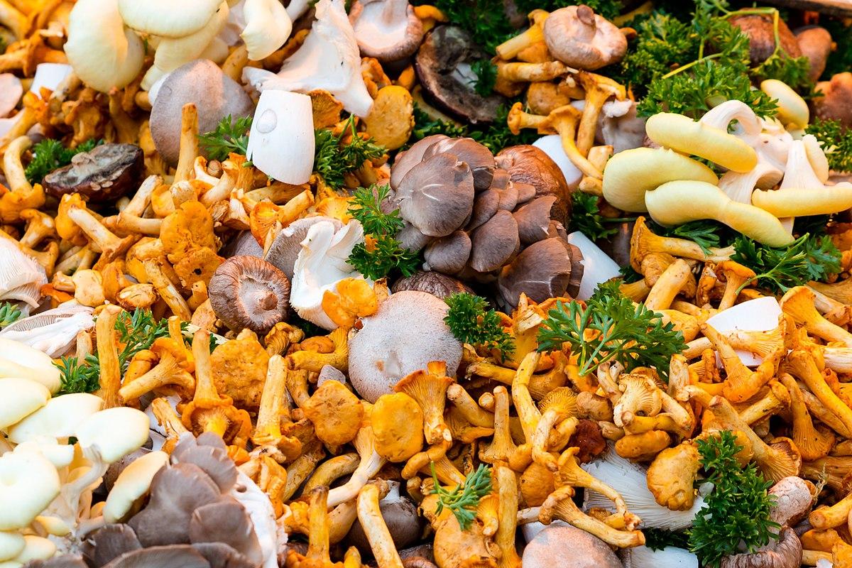 Champignon comestible — Wikipédia