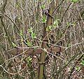 MOs810 WG 14 2016 (Jozefow, old ev. cemetery) (7).JPG