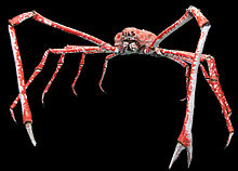 Japanese spider crab - Wikipedia, the free encyclopedia