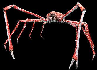 Japanese spider crab - Image: Macrocheira kaempferi