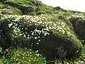 Malá Fatra, kvety v júni (6).jpg