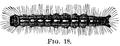 Malacosoma disstria-caterpillar.png
