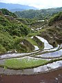 Maligcong rice terraces (3299284769).jpg