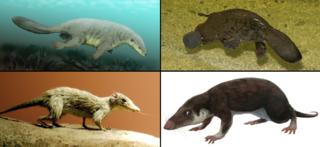 Mammaliaformes Clade of tetrapods