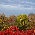 Maple Grove (2693518255).jpg