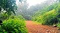 Matheran in August2012 - panoramio (4).jpg