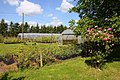 Mattock's Roses in Abingdon - geograph.org.uk - 1354996.jpg